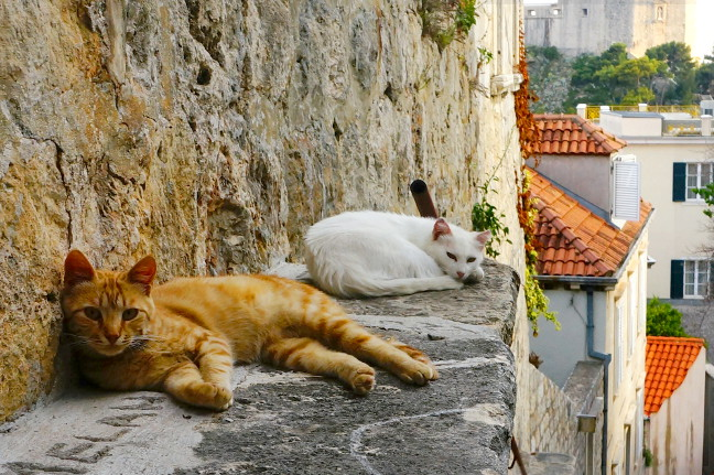 Cats in the oldtown of Dubrovnik.