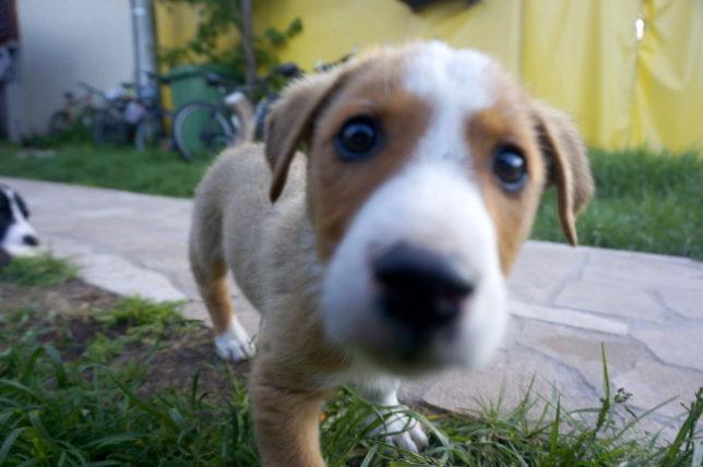 Tiny dog at Hikers Den Hostel.
